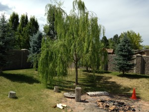 Willow Tree, July 2014